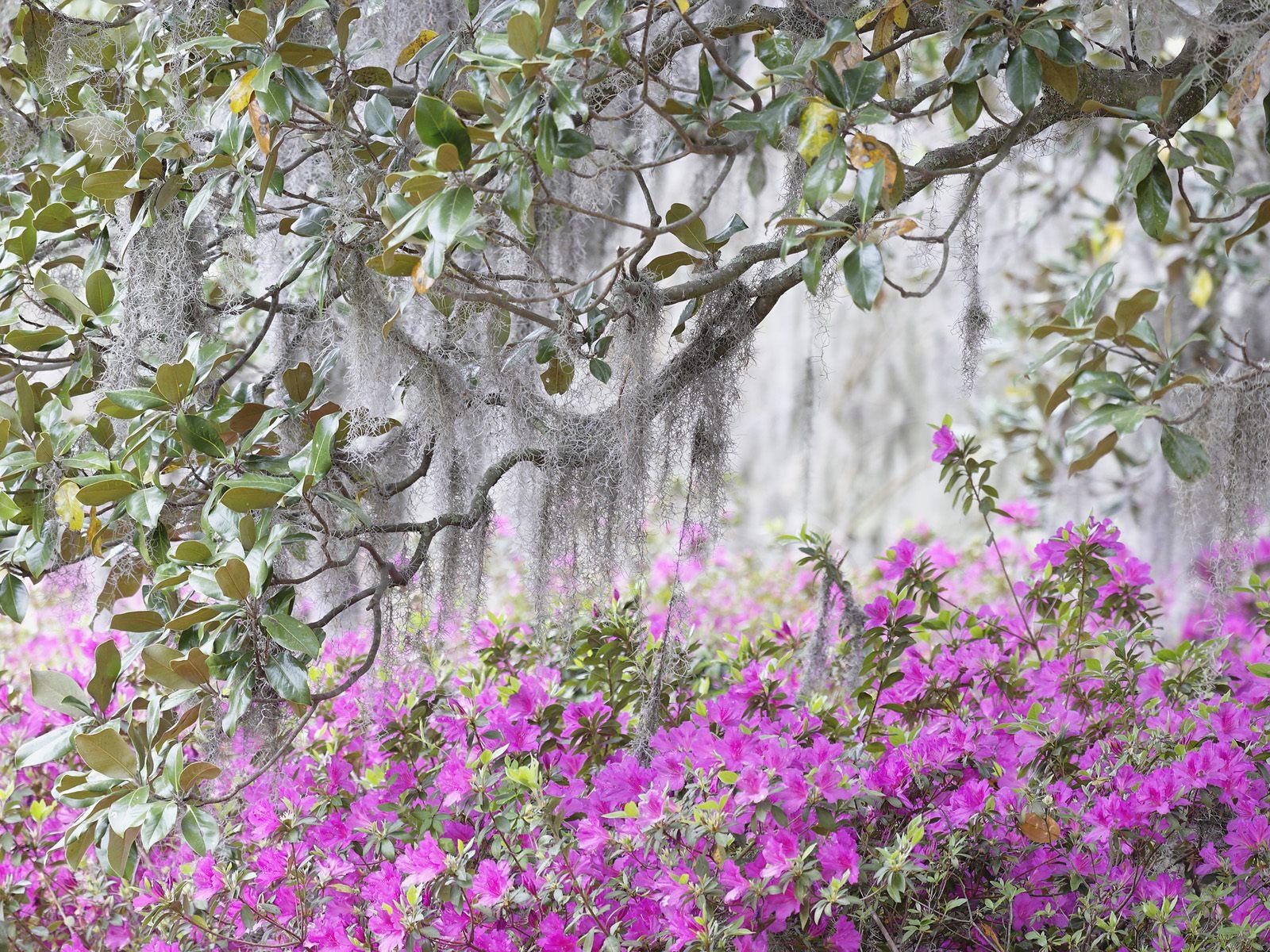 صور ورود جميلة اجمل صور الورد والازهار بجودة HD (43)