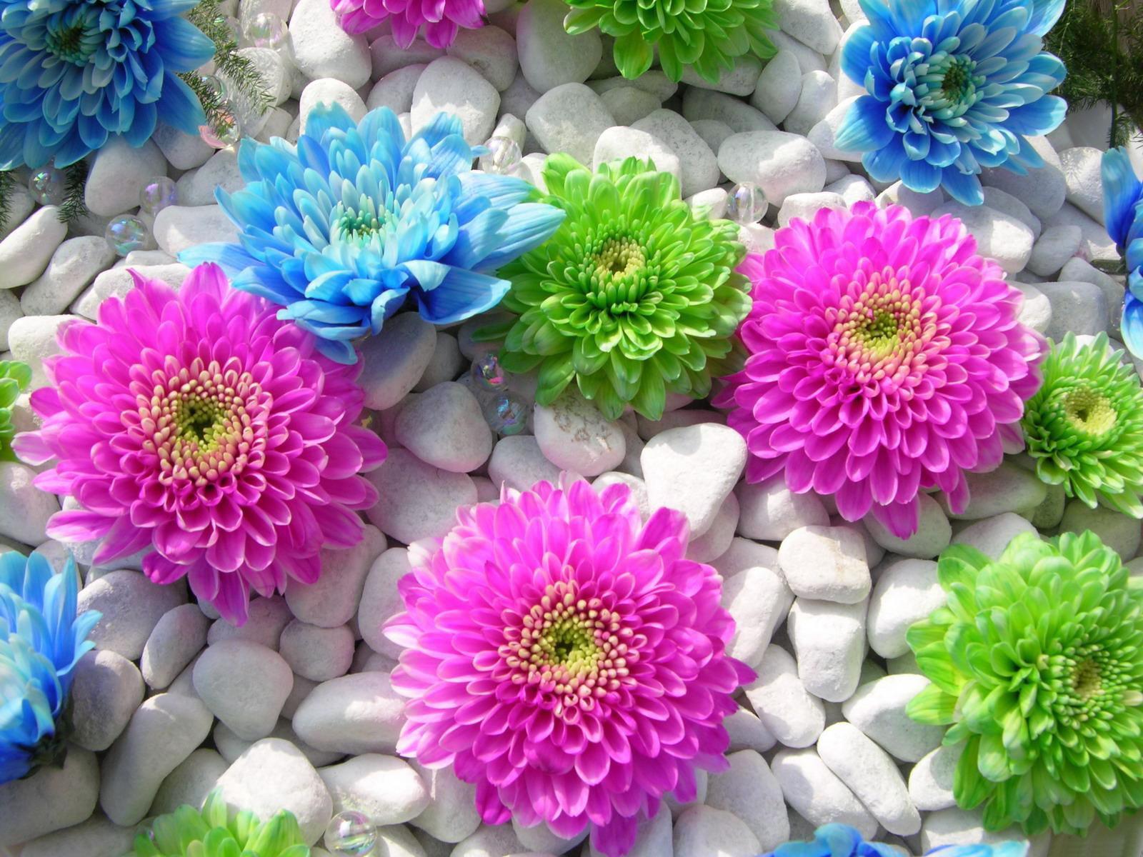 صور ورود جميلة اجمل صور الورد والازهار بجودة HD (45)