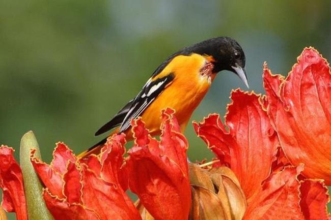 صور ورود جميلة اجمل صور الورد والازهار بجودة HD (5)