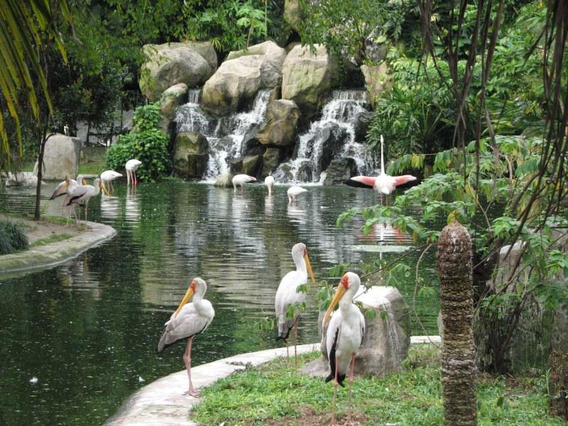 صور السياحة في ماليزيا صور من ماليزيا (12)