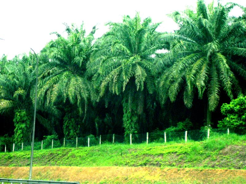 صور السياحة في ماليزيا صور من ماليزيا (19)