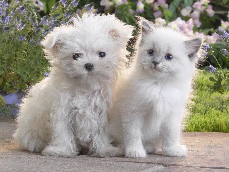 صور قطط حلوة وجميلة بسس جميلة روعة (16)
