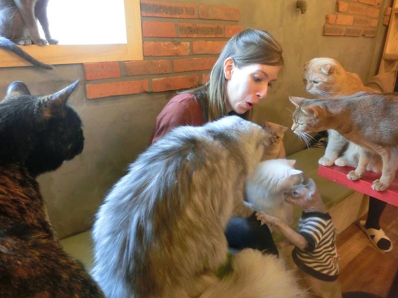 صور قطط حلوة وجميلة بسس جميلة روعة (4)