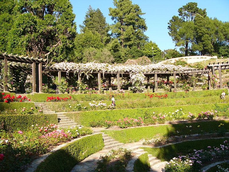صور حدائق فلل وقصور اجمل مناظر حدائق (9)