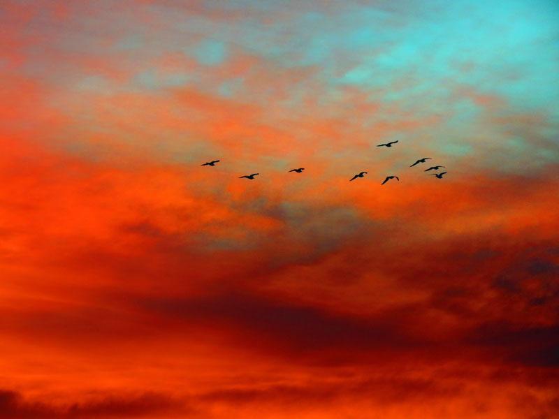 صور عن غروب الشمس اجمل خلفيات الغروب (15)