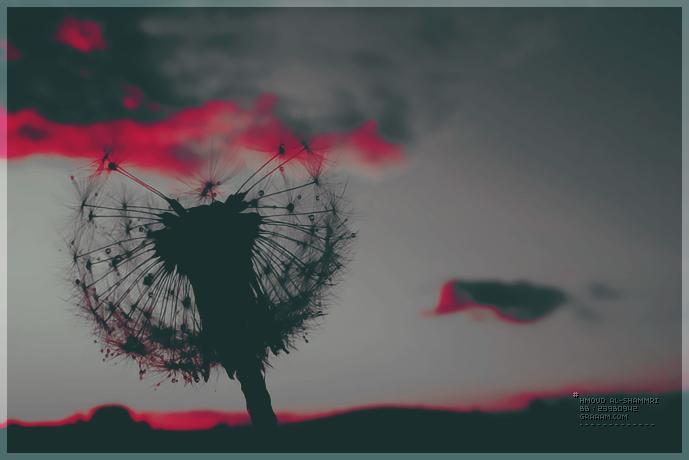 صور خلفيات ايباد ميني مميزه hd (3)
