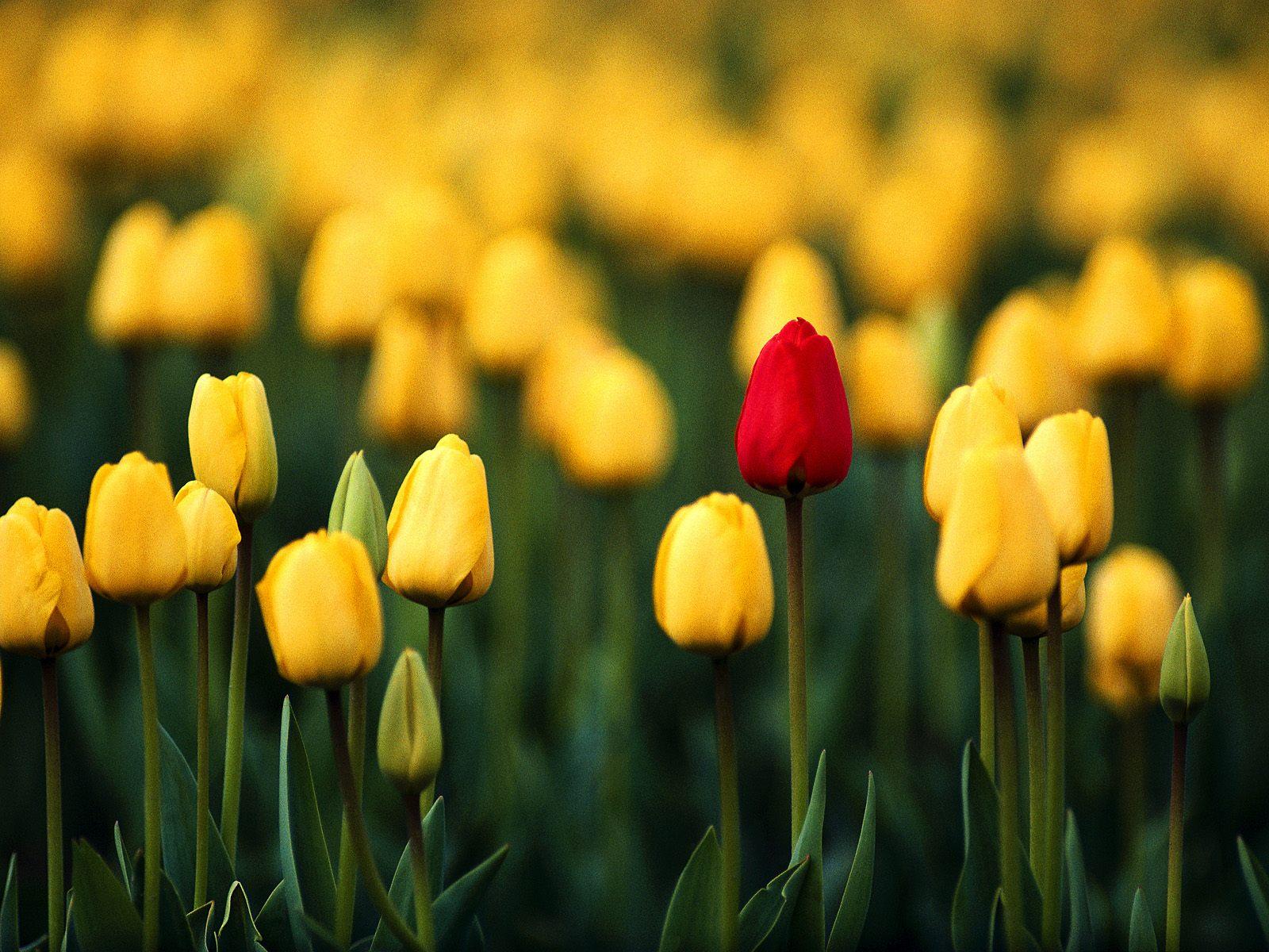 صور ورد Flowers Pictures خلفيات 10
